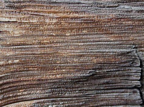 woodworking az arizona wood chris higgins is still typing