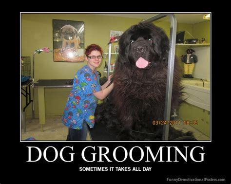 Dog Groomer Meme - ekcgrooming everything about dog grooming information