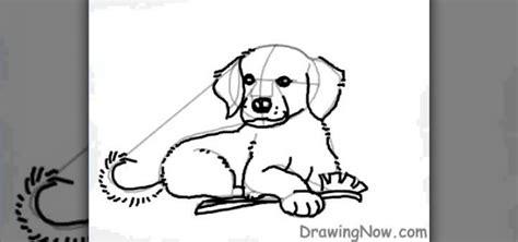 how to draw a realistic golden retriever puppy how to draw a golden retriever puppy 171 drawing illustration wonderhowto