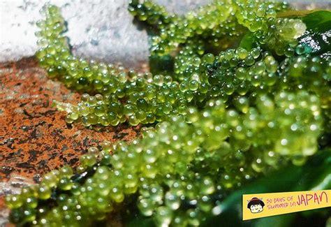 Sho Caviar by Pin By Tamara Kozielec On Photos Phor Phoodies
