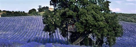 la piantata casa sull albero casa sull albero per bambini dove trovarne in italia