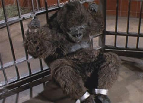 gorilla  zoo planet   apes wiki fandom powered  wikia