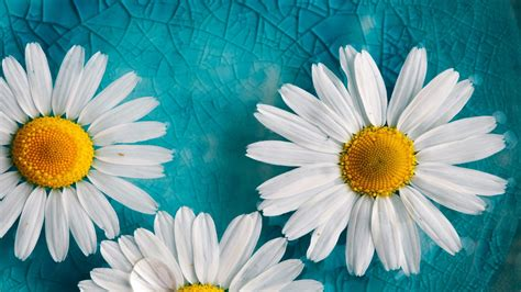yellow white flowers blue cracked glass hd wallpaper