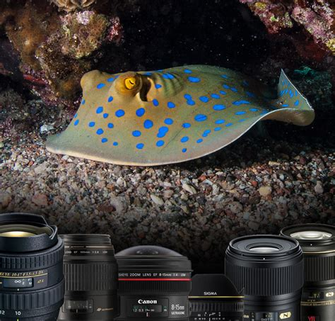 best underwater lensesunderwater photography guide choosing the best lens for dslr underwater mozaik uw