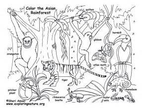 coloring pages rainforest animals hardwood forest coloring page exploring nature