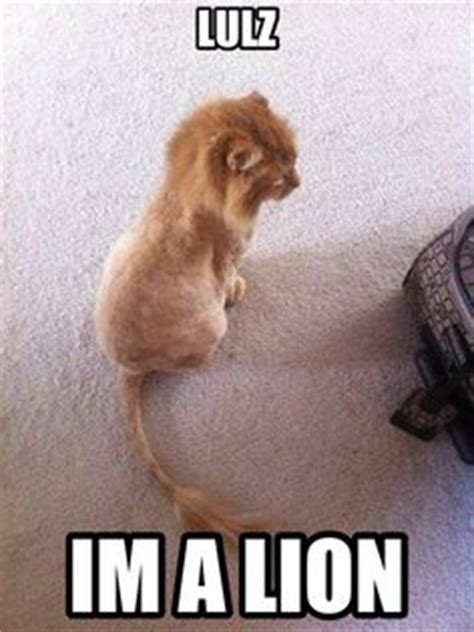 Shaved Cat Meme - 1000 images about cats kittens great and small on