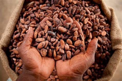 Low Country Home Plans ivory coast and ghana to increase cocoa processing