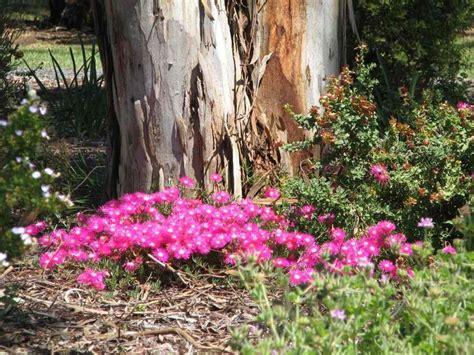 wittunga botanic garden 17 best images about adelaide plants on