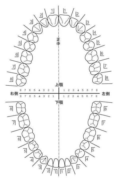 dental formula 歯式 wiki