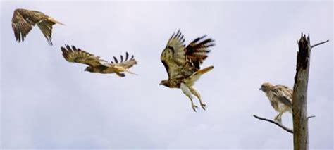 eagles on pinterest