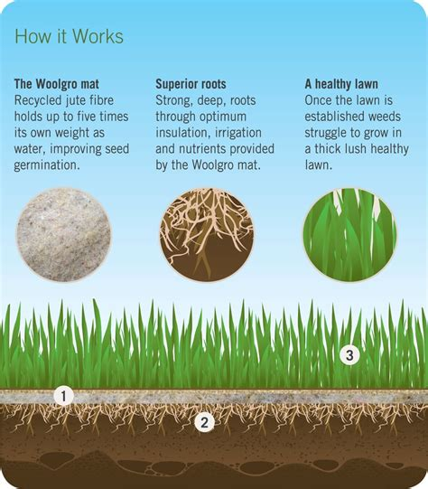 Straw Mats For Grass Seed by Grass Seed Mat Nz Best Lawn Installation Auckland Ready Lawn