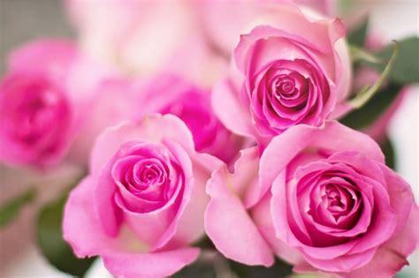 imagenes de rosas sombreadas c 243 mo hacer que las rosas no se marchiten