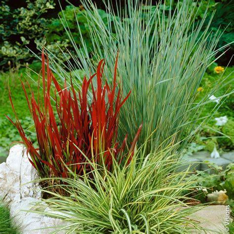piante da vaso per esterno invernali fiori invernali per aiuole piante invernali da vaso per