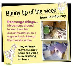 Must For The Week The House Bunny by How To Make A Digging Box For Your Rabbit Small Animal
