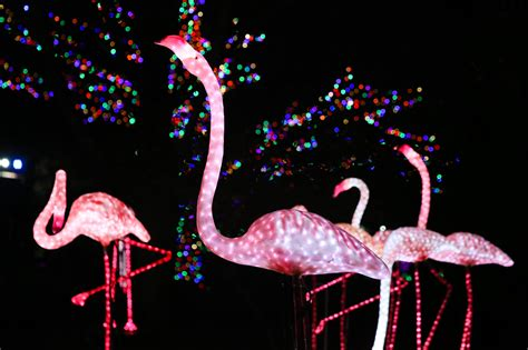 Zoolights Returns To Illuminate The Holiday Season Dc Zoo Lights Hours Dc