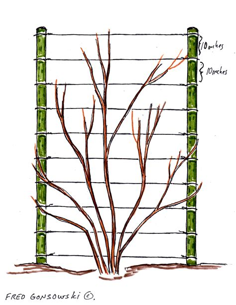 how to build a trellis for climbing plants an easy to make and inexpensive trellis for clematis