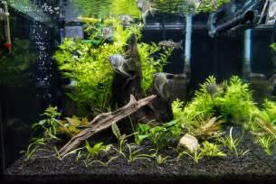 Best Low Light Aquarium Plants led aquarium light reef amp planted lighting aquaray