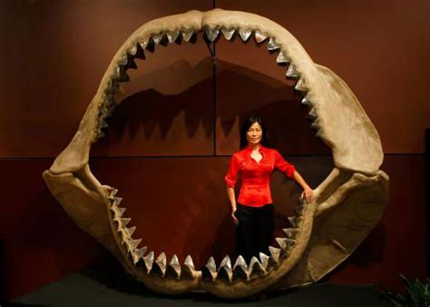 megalodon shark size 10 incredible facts about megalodon