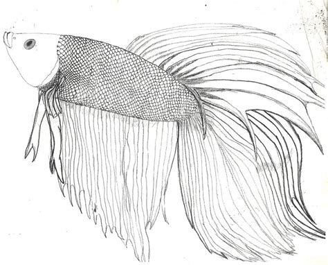 coloring pages betta fish betta fish d and some info by zs99 on deviantart