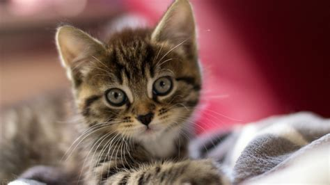 kitten background kittens wallpapers hd
