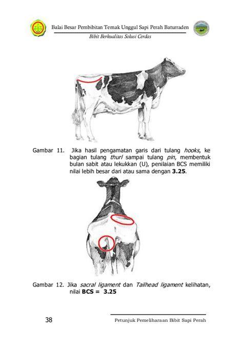 Gergaji Tulang Sapi petunjuk pemeliharaan sapi perah