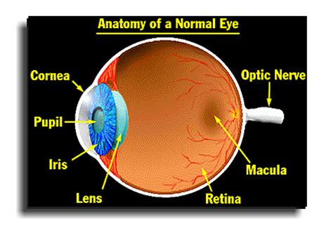 Ls For Macular Degeneration by Macular Degeneration Lutein And Zeaxanthin Viral