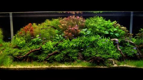 Aquascaping World Competition - Gallery - Rise of Nature ... Ludwigia Repens