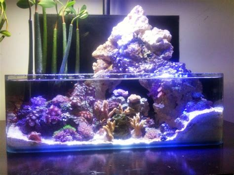 reef aquascaping ideas 23 best images about nano reefs on pinterest gift