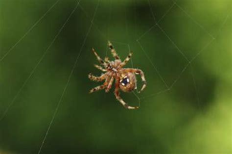 Garden Spider Benefits Garden Spider In House 28 Images Spider How Do I If A