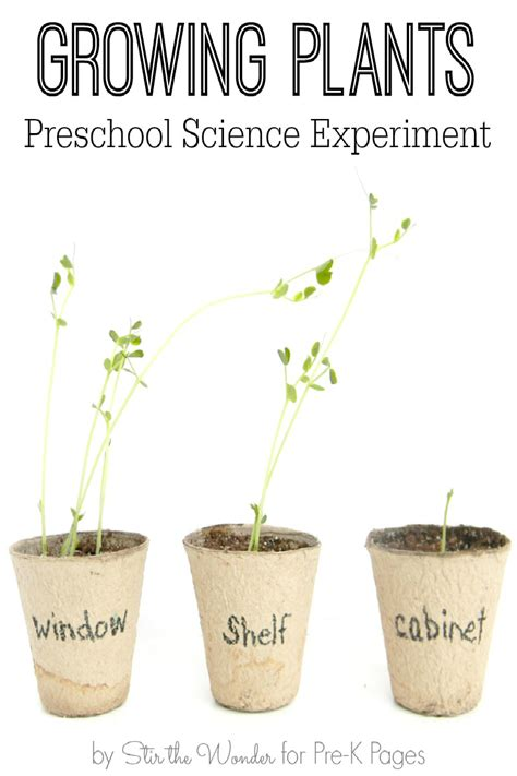 growing in the dark plants and light science project education com science for kids growing plants experiment pre k pages