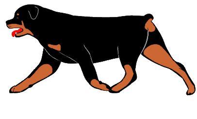 rottweiler gif judges cv ian geddes cook jd