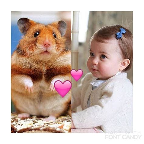 his royal whiskers books 1000 images about hrh marvin the royal hamster on