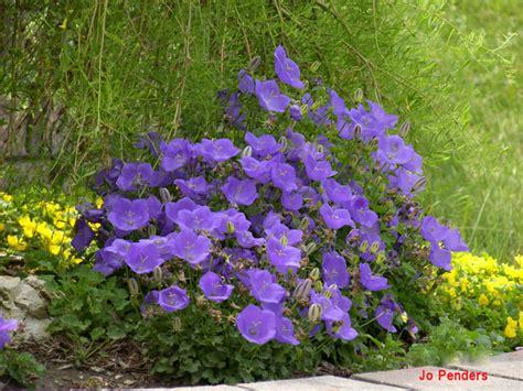 flora fauna flowerbed details
