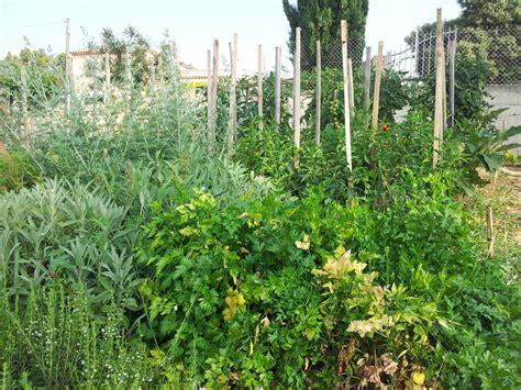 jardin de plantes aromatiques massif de plantes aromatiques le jardin du caillou