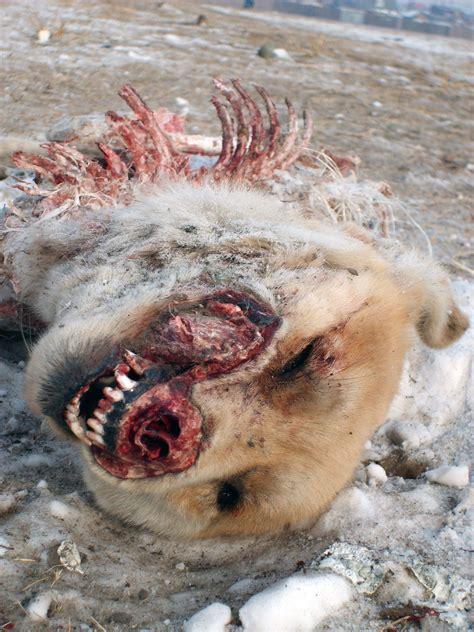 dead dogs dead free stock photos libreshot