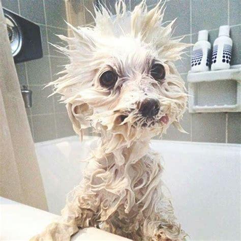 how to make bath time fun for dogs dog training nation bath time fun lol d lo pets pinterest bath