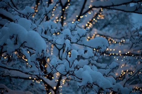 tree with snow and lights i winter