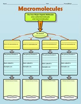 graphic organizer for organic or macromolecules by
