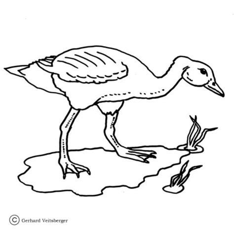 coloring pages of hunting dogs pheasant hunting coloring pages coloring pages