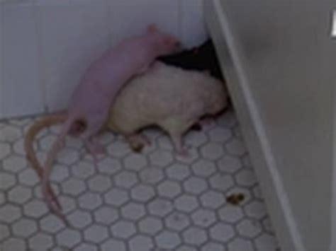 room full of rats my extreme animal phobia youtube