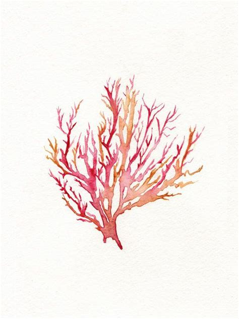 pink coral best 25 coral watercolor ideas on watercolor