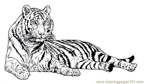 coloring page bengal tiger bengal tiger coloring pages coloring page
