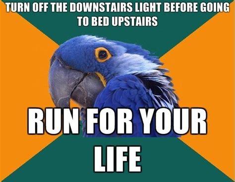 Paranoid Parrot Meme - image 93745 paranoid parrot know your meme