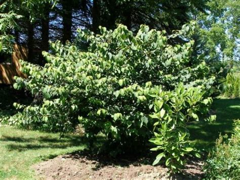 blank page 2 - Non Flowering Shrubs