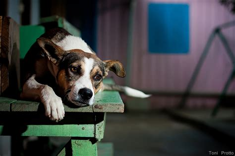 dog breeding bench recognizing animal cruelty and what to do about it