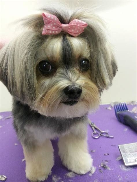 scrubby puppy grooming services at scrubby puppy the best for your pet at