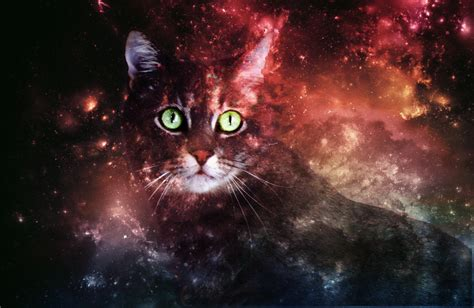 Wallpaper Galaxy Cat | galaxy cat wallpaper