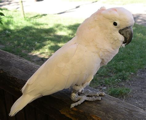 jenis jenis burung kakak tua di indonesia lengkap manuk