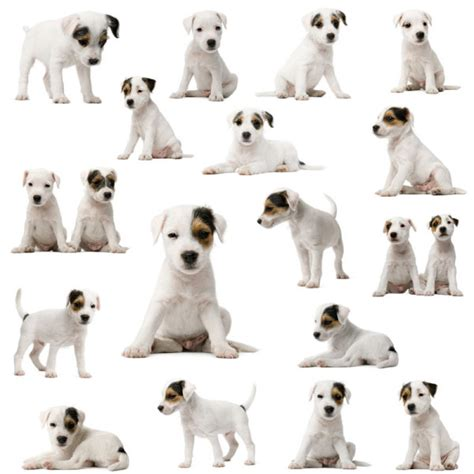 sea dogs definition 4 designer puppies 04 high definition pictures