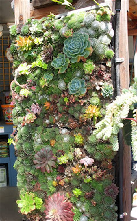 Succulent Frame My Farmscape - capers and crayons repurposed container gardening